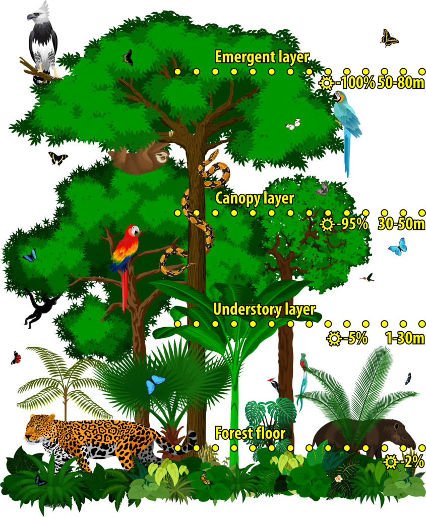 12 Amazing Rainforest Facts For Kids Jellyquest
