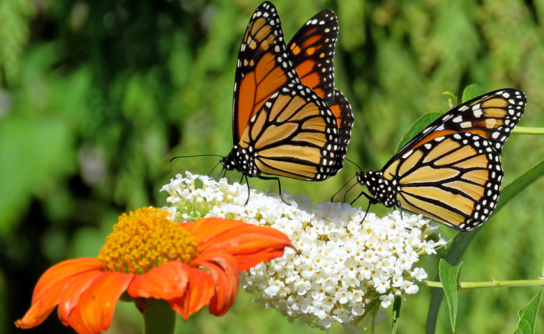 15 Fluttery Butterfly Facts