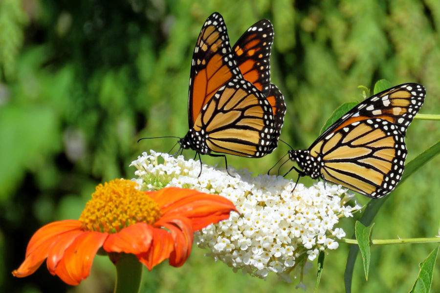 15 Fluttery Butterfly Facts for Kids