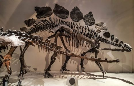 21 Spectacular Stegosaurus Facts